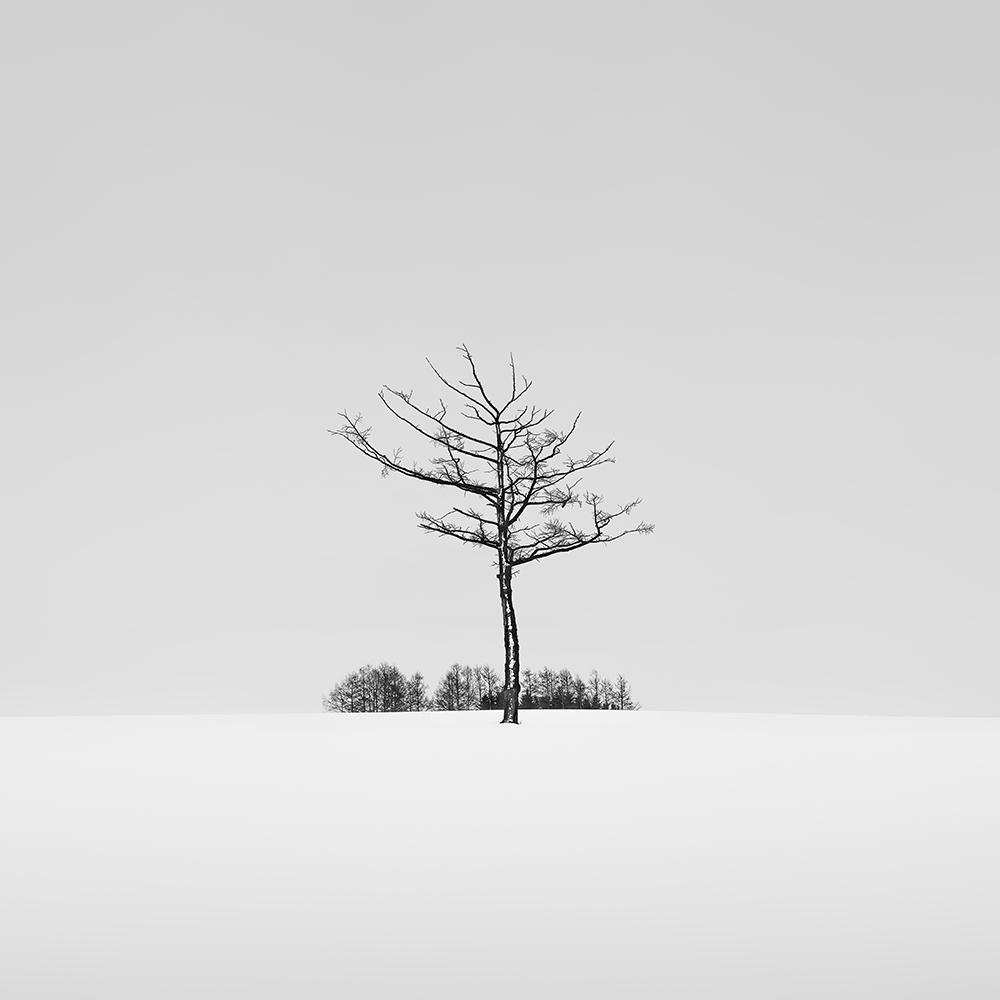 SNOW TREE NO.47 -HOKKAIDO -2018