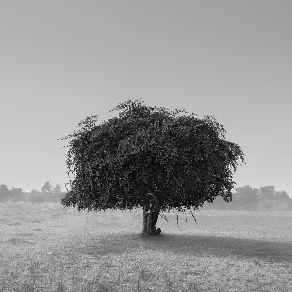 TREE NO.17 -MYANMAR -2016