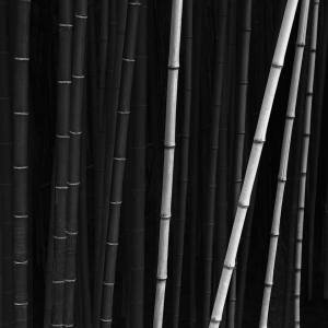 BAMBOO -SOUTH KOREA -2016