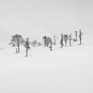 SNOW TREE NO.17 -HOKKAIDO -2017