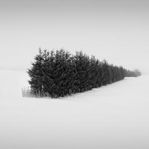 SNOW TREE NO.38 -TESHIKAGA -HOKKAIDO -2017