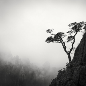 黄山 TREE NO.6 -ANHUI -CHINA -2019