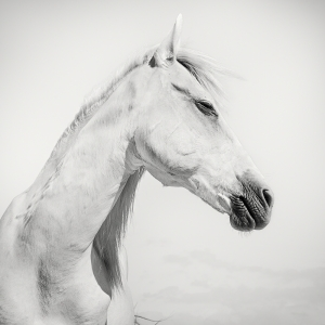 SPIRITED HORSE -NEWFOUNDISLAND -2019
