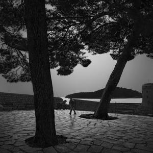 TREE NO.25 -CROATIA -2016