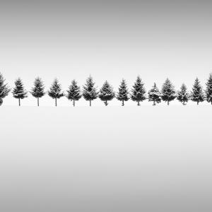 THIRTEEN TREES -HOKKAIDO -2017