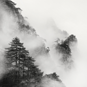 黄山 TREES NO.4 -ANHUI -CHINA -2019