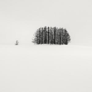 SNOW TREE NO.70 -BIEI -HOKKAIDO -2018