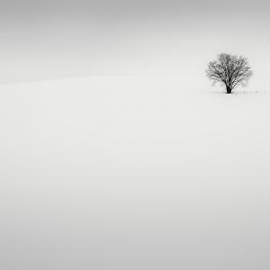 SNOW TREE NO.69 -BIEI -HOKKAIDO -2018