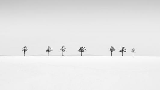 TREE NO.8 -HOKKAIDO -2015