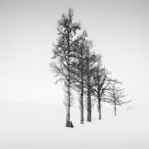 SNOW TREE NO.39 -BIEI -HOKKAIDO -2017