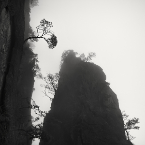 黄山 TREES NO.8 -ANHUI -CHINA -2019