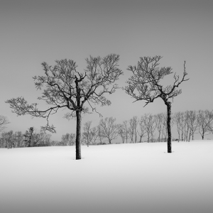 SNOW TREE NO.33 -TESHIKAGA -HOKKAIDO -2017