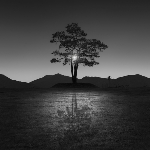 TREE NO.30 -SOUTH KOREA -2016