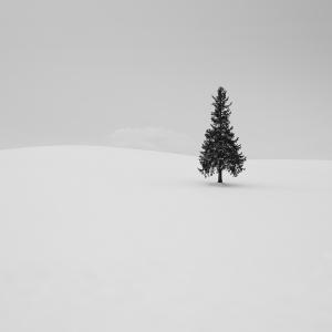 SNOW TREE NO.2 -BIEI -HOKKAIDO -2017