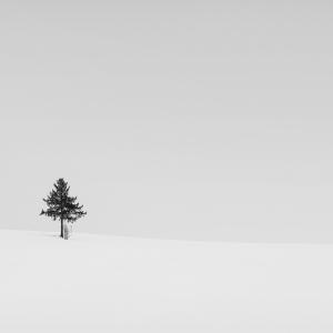 SNOW TREE NO.16 -BIEI -HOKKAIDO -2017