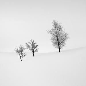 SNOW TREE NO.15 -BIEI -HOKKAIDO -2017
