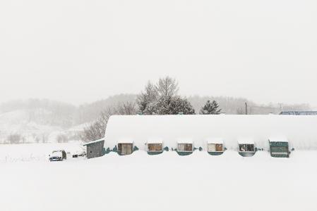 TROJ -SMILING IN THE SNOW