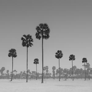 TREE NO.15 -MYANMAR -2016