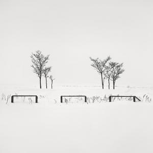 SNOW TREES NO.55 -ABASHIRI -HOKKAIDO -2018