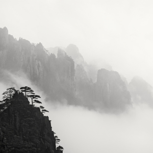 黄山 TREES NO.10 -ANHUI -CHINA -2019