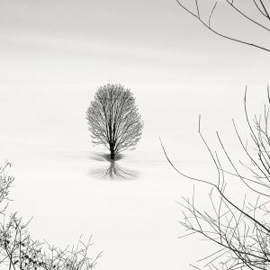 SNOW TREE NO.68 -HOKKAIDO -2018