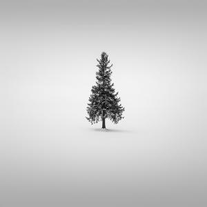 SNOW TREE NO.30 -BIEI -HOKKAIDO -2017