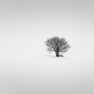 SNOW TREE NO.36 -HOKKAIDO -2017